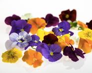 Ahlbergin Syötäviä kukkia, orvokki, luomu, 20g rasia