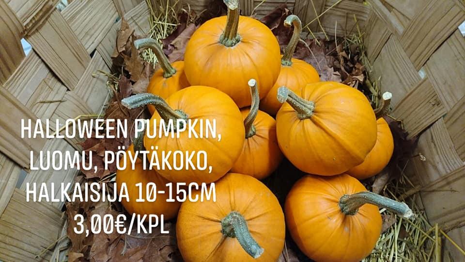 Ali-Marttilan Luomu Mini Pumpkin, 1kpl