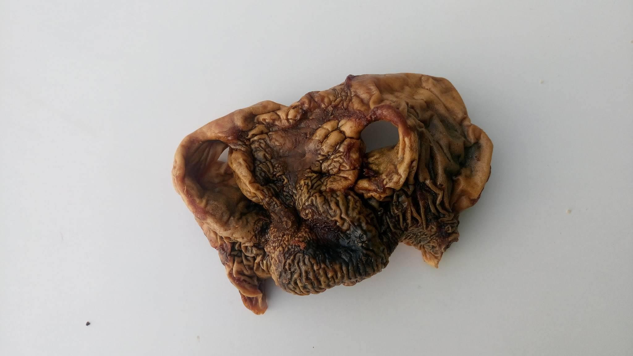 Kuivattu Hevosen nenu n.100g/kpl